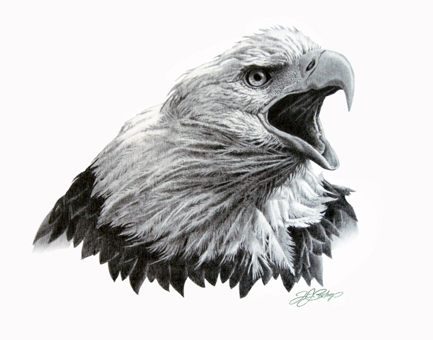 It is a photo of Punchy Drawing Of Eagle